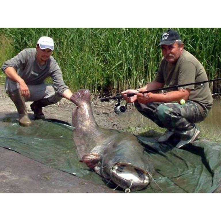 A Palotási-víztározó eddigi legnagyobb hala