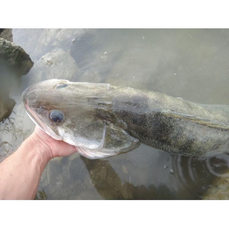 Csodaszép hal