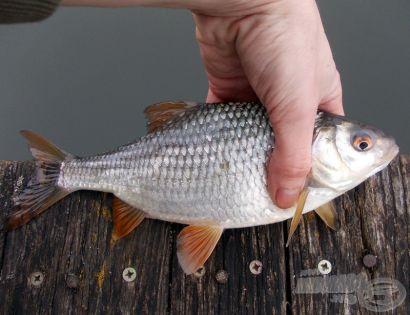 A 2016. év legszebb fogásai 2. rész - egyéb halak: Szavazz az év fogására!