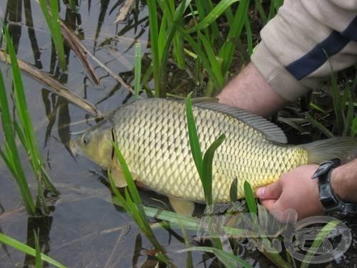 Ezt a halat is, a gumizott matchbotnak köszönhettem
