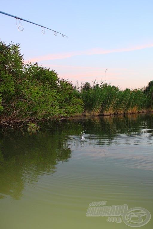 A nádfalhoz közeli helyek adták a legtöbb nagytestű halat