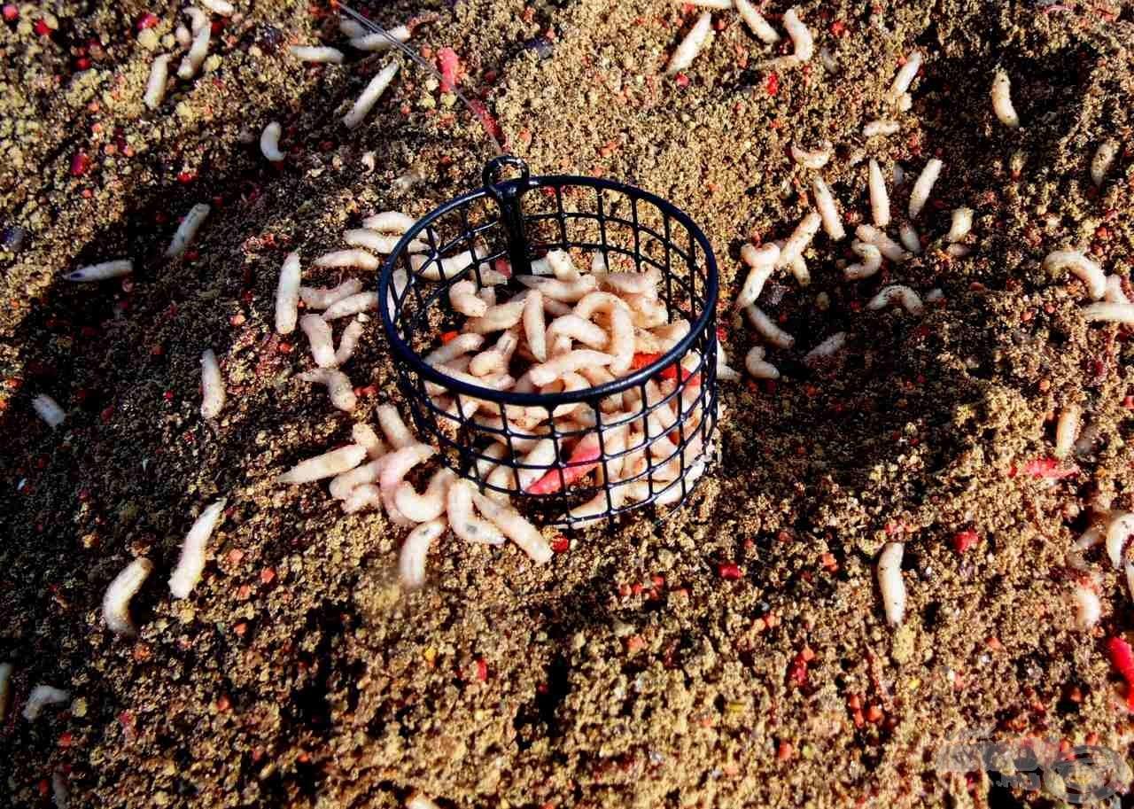 Sok kaja + sok élő csali = sok hal, én ennek a képletnek vagyok a híve…