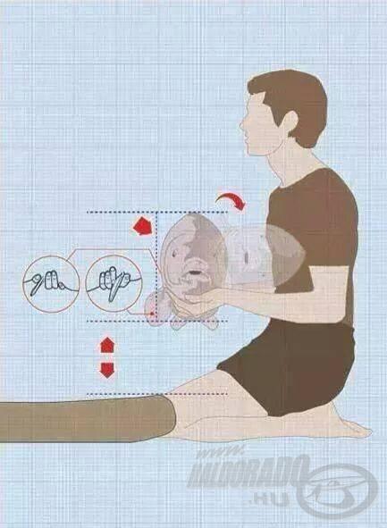 A nyakátfogós tartási módszer helyes mozzanatai