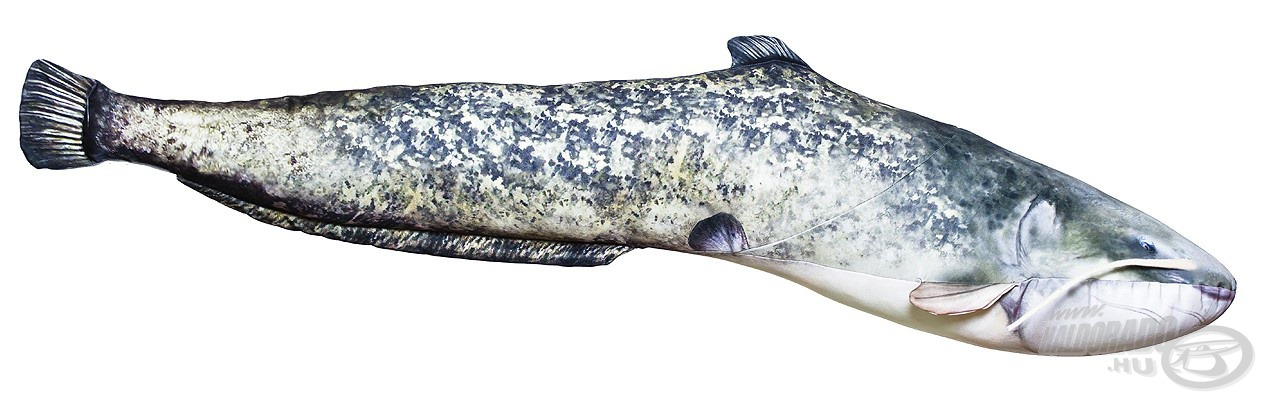 Vizeink legnagyobbra növő hala a harcsa, melynek párna változata is kiemelkedő a maga 115 cm-es méretével