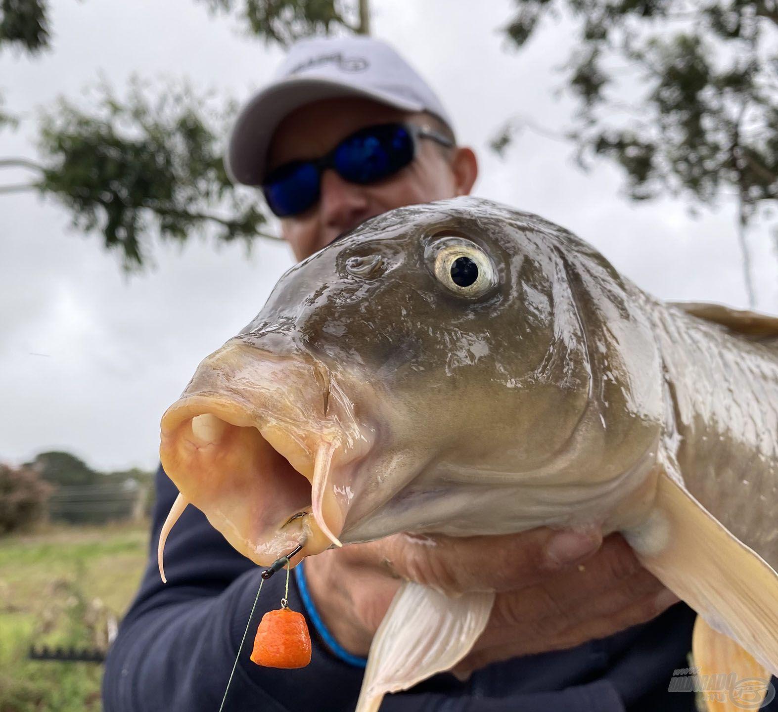 Ez a hal is visszahozta