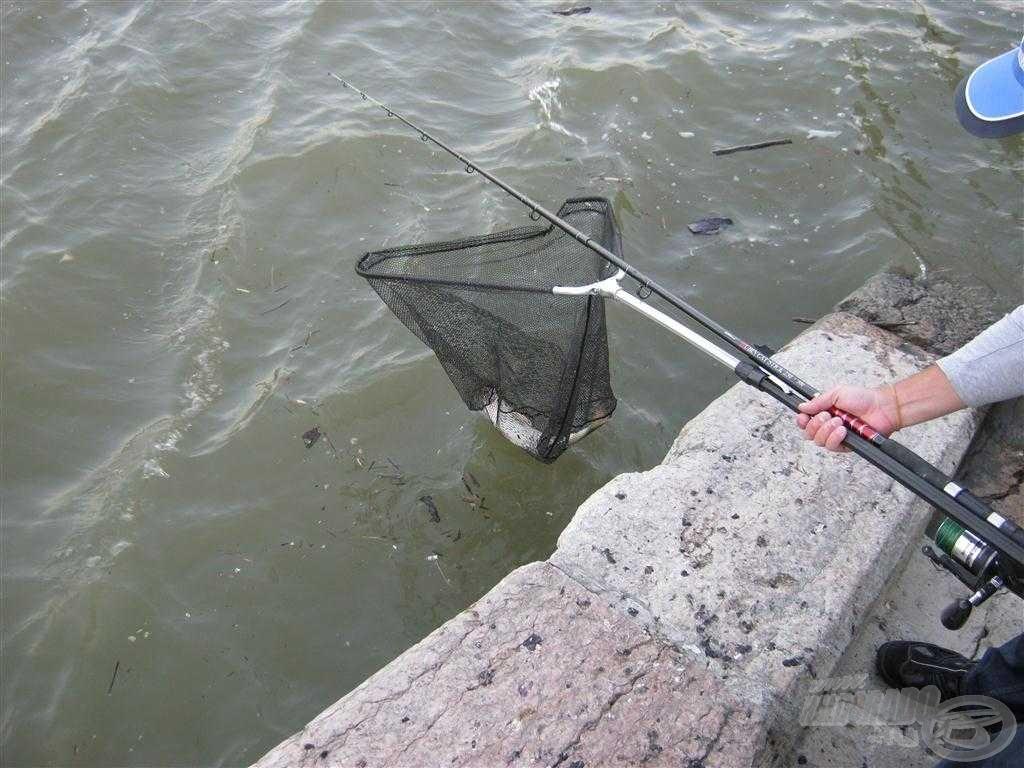 Biztos kézzel kell meríteni, nehogy a hal kereket oldjon!