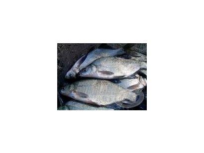 A rakós botos horgászat ABC-je 8. rész - Szerelék ötletek III.Keszegezés állóvízen Békési Attila mesterhorgász segítségével