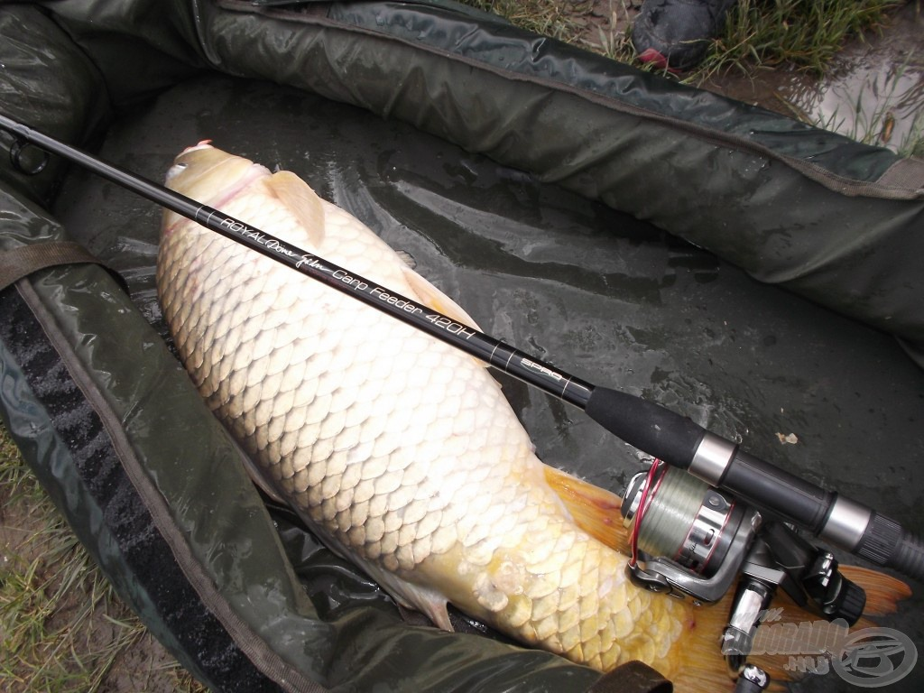 Kedvenc felszerelésem jelesre vizsgázott az újabb szép hal elleni küzdelemben…