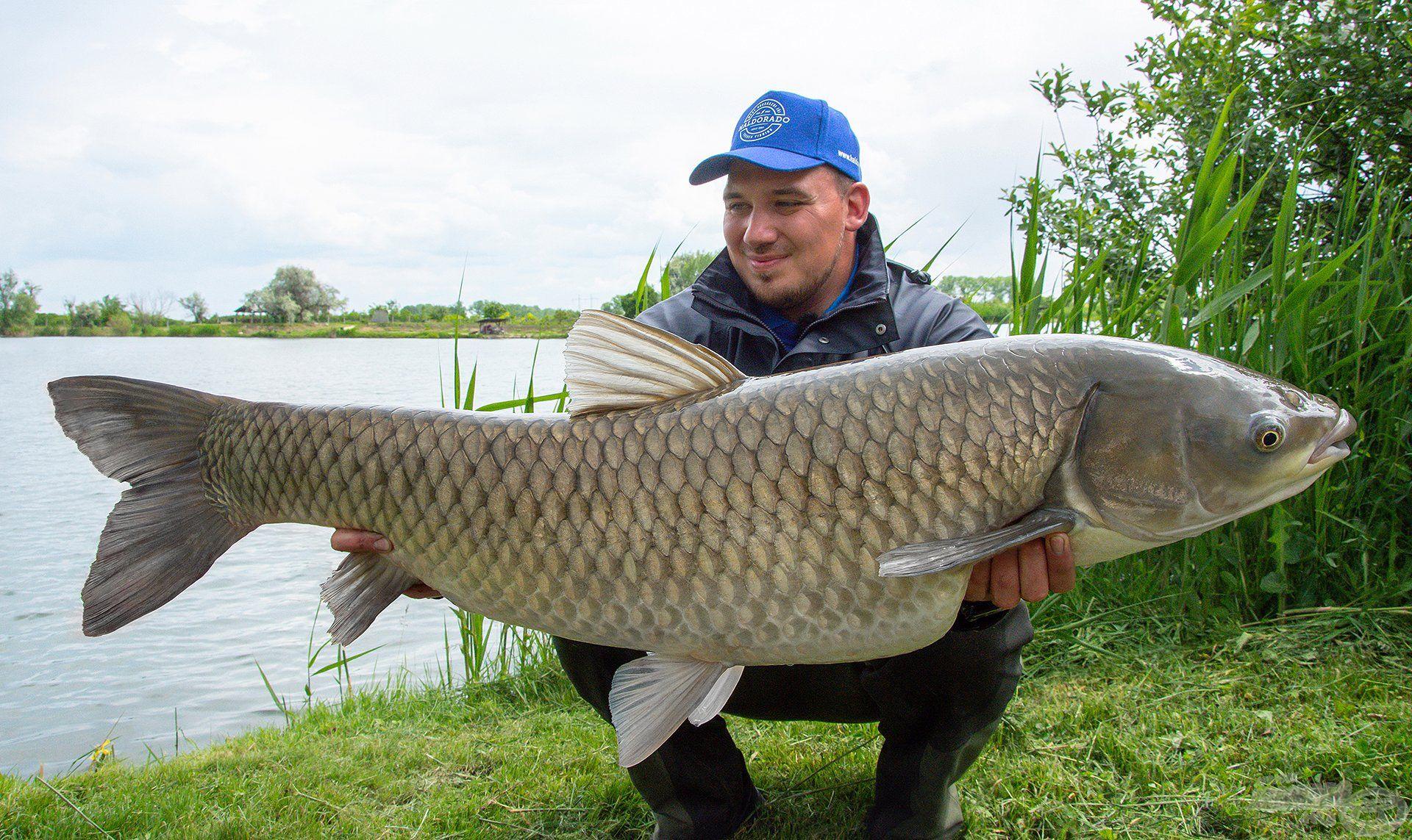 A legnagyobb amurom ez a 15 kg feletti példány volt, amit a Mátravíz horgásztóból sikerült kifognom