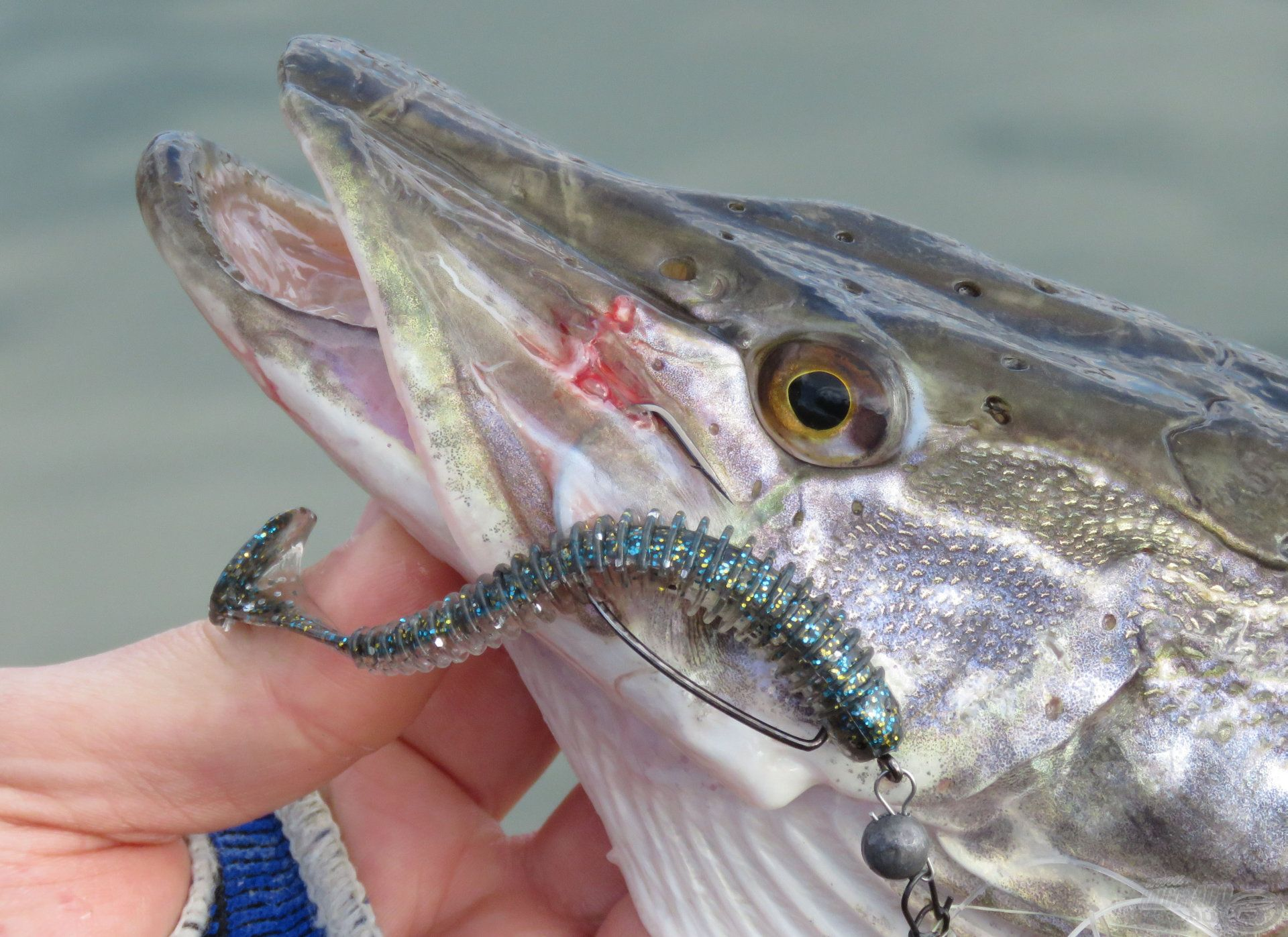 A tó vize nagyon tiszta, így az élethű színű csalik jobban adták a halat