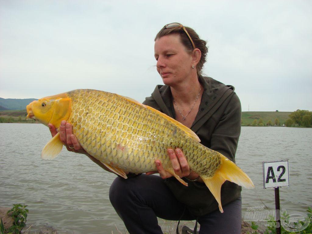 Ismét egy horgászhölgy szép fogása