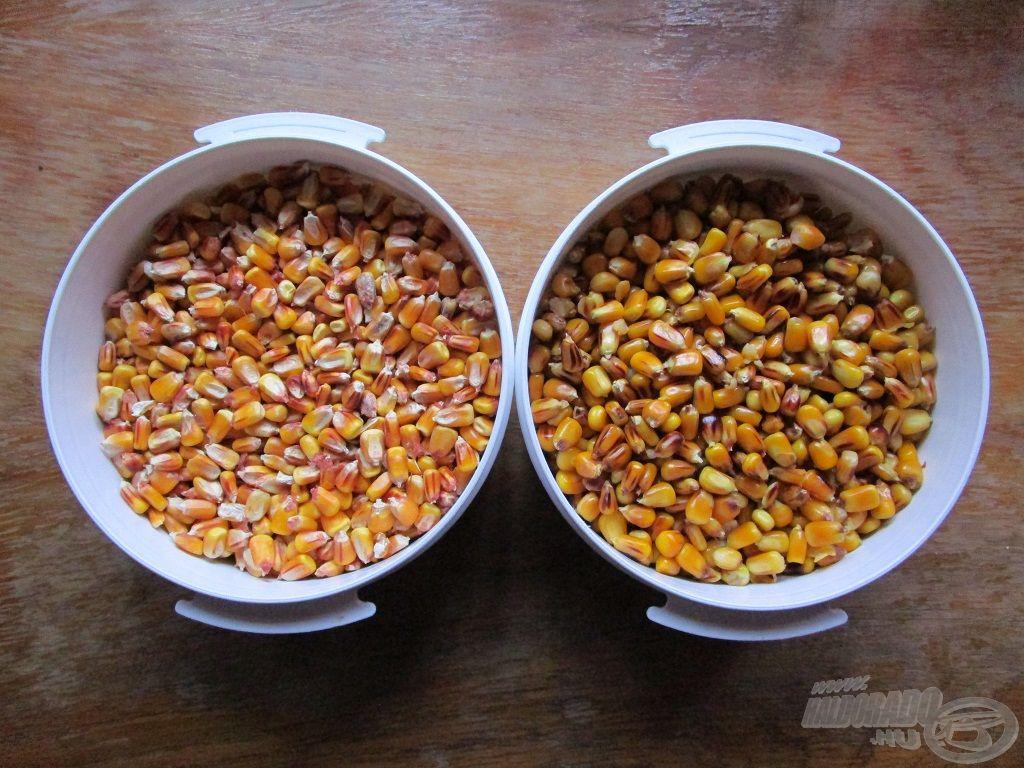 A főtt kukorica a pontyok és amurok nagy kedvence