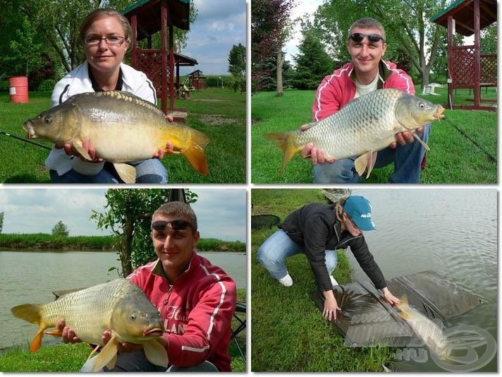 A délután további halai