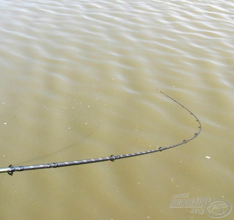 Úgy vélem, nagyon jól sikerült a horgászatra szánt napom, még a vendéglátónk, Imi bácsi is - akivel mindig szívjuk egymás vérét - megdicsért engem és a felszerelésem egyaránt. :-) Ennél nagyobb elismerést nem is kaphatnék tőle