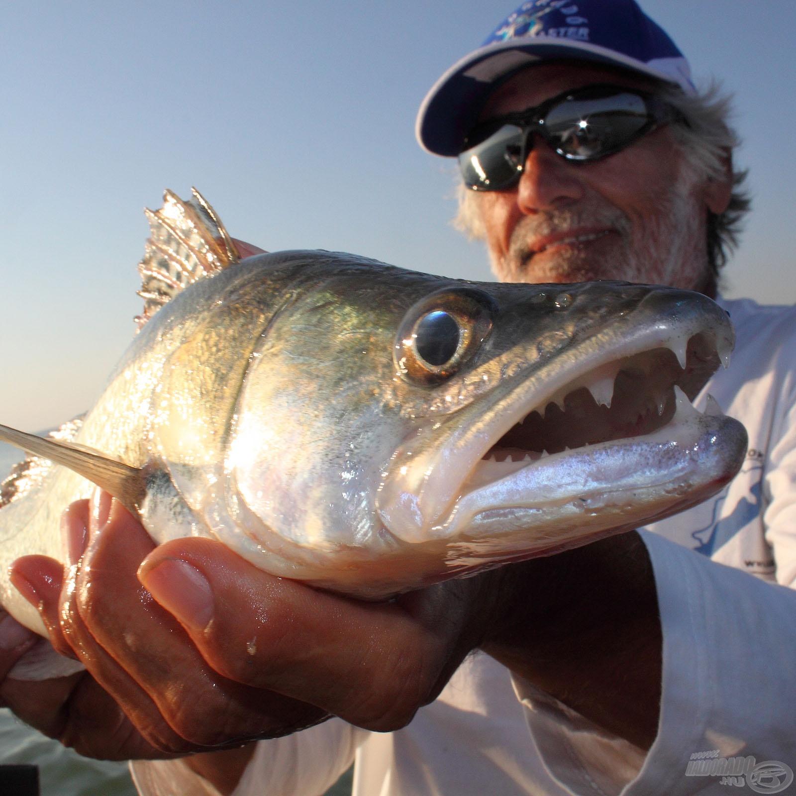 Süllő horgászat