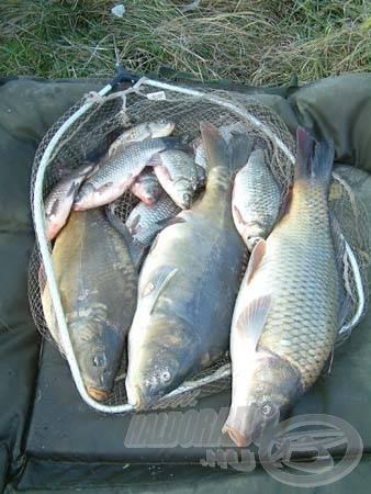 Három szép ponty és sok kárász lett a kb. 5-6 órás horgászat végeredménye (januárban!)