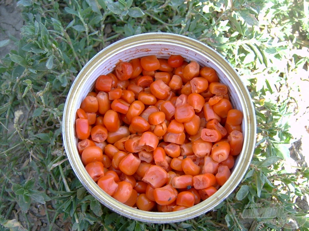 Sweetcorn - csemegekukorica