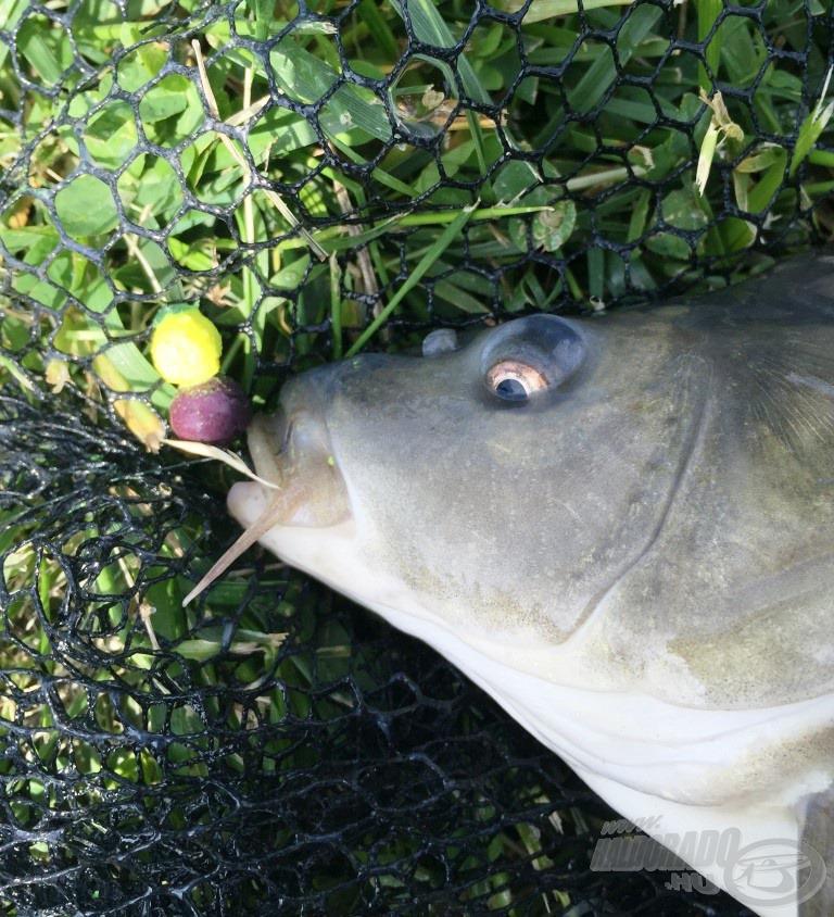 Az első vendég az ananászos-áfonyás szendvicsre éhezett meg