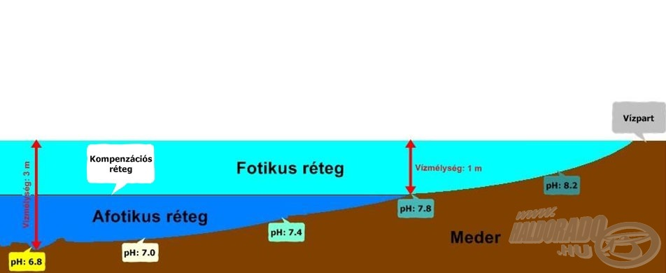 Egy sematikus ábra a vízmélység és a pH-érték alakulása közötti összefüggésekre a völgyzárógátas tavak esetében. A feltüntetett értékek itt csak a folyamatok jó szemléltetését szolgálják