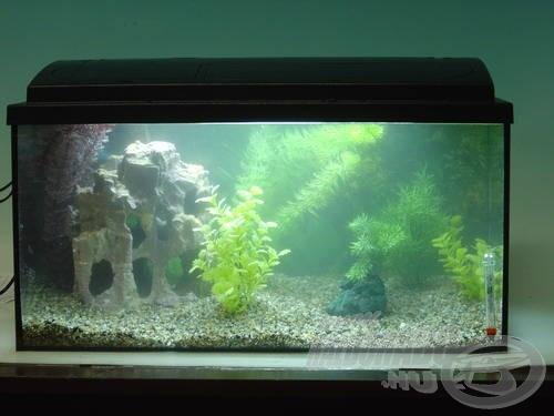 A frissen feltöltött akvárium