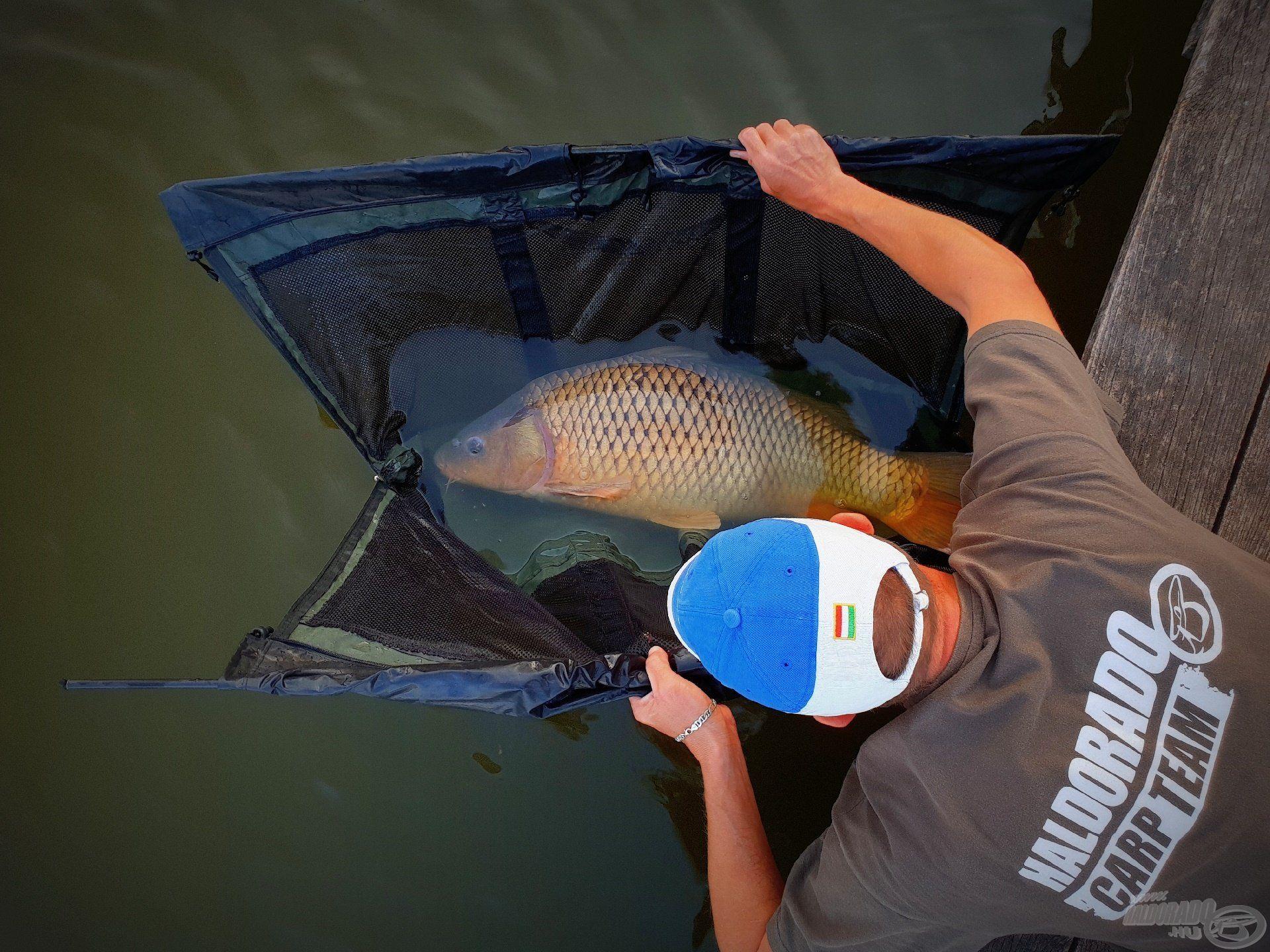 A horgászat egyik legszebb része, a szabadon engedés pillanatai