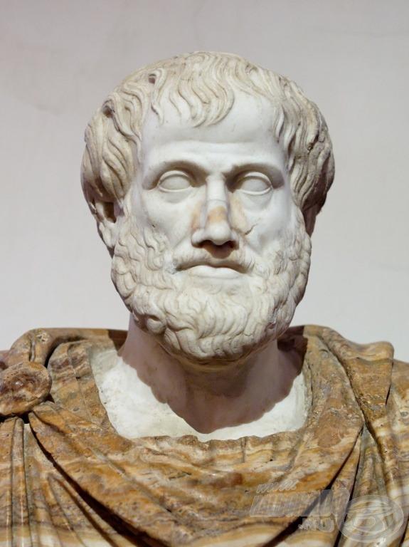 Már Arisztotelészt is kíváncsivá tette rejtélyes életmódjával