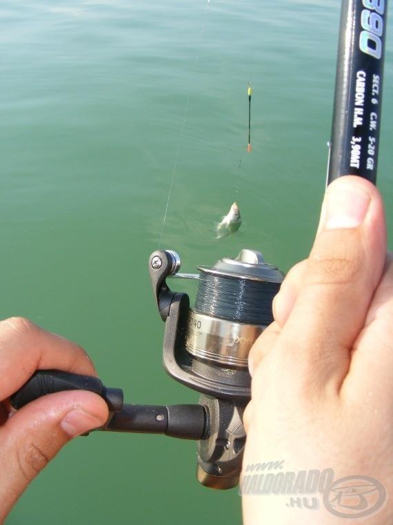 A horgász (illetve a kamera) szemszögéből