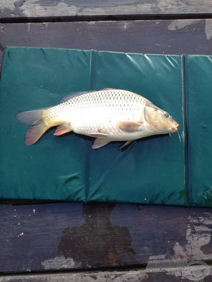 Szép, egészséges hal