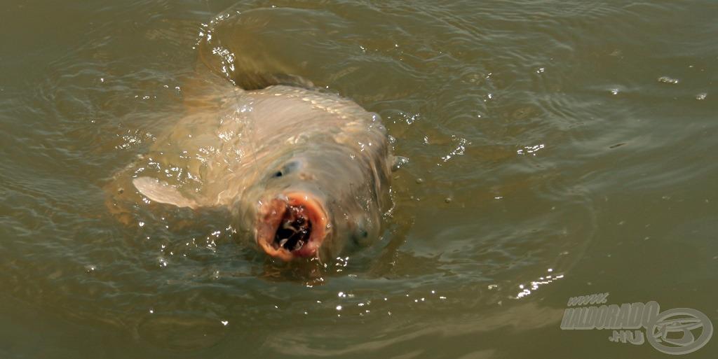Termetes halakon szeretnénk teszteltetni a felszereléseket