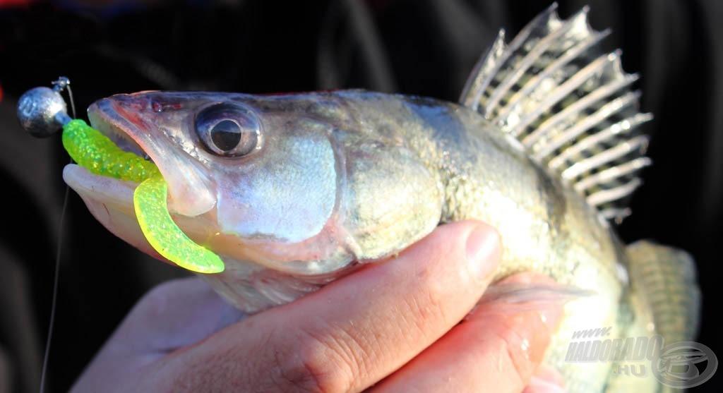 Népszerű a horgászok körében a neonzöld szín