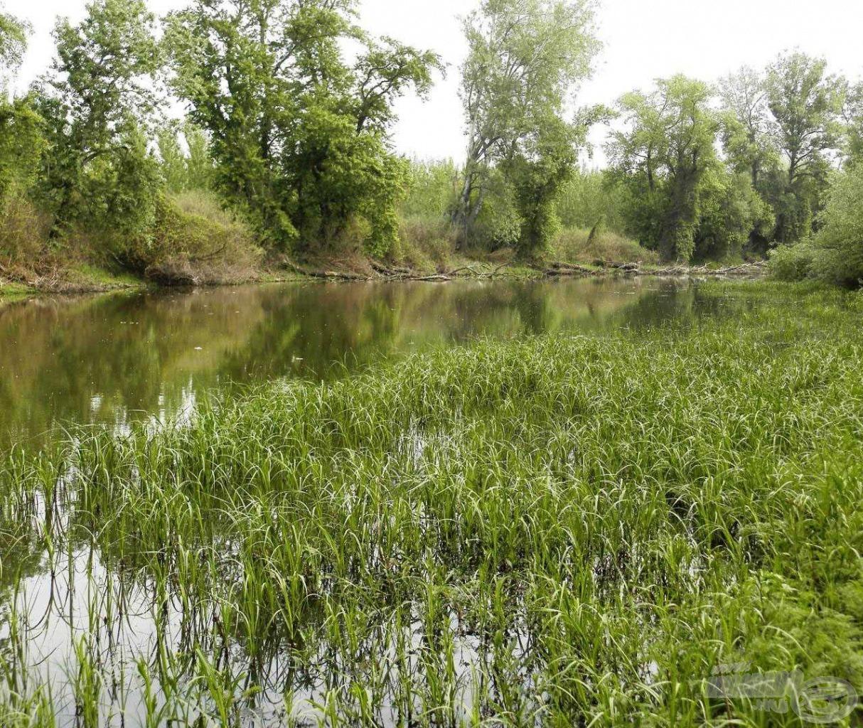 Nagyon sekély víz, kevés horgászható felülettel