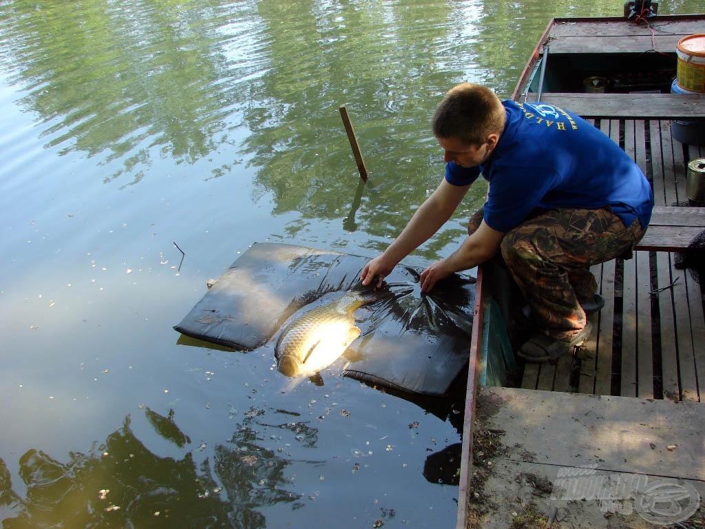 Szuper érzés volt szabadjára engedni ezeket a gyönyörű halakat