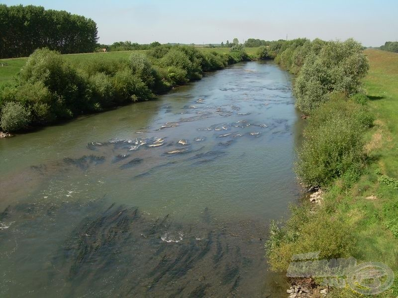 Szeghalomtól húsz kilométerrel feljebb már a vízfenék is látszik a hídról lepillantva