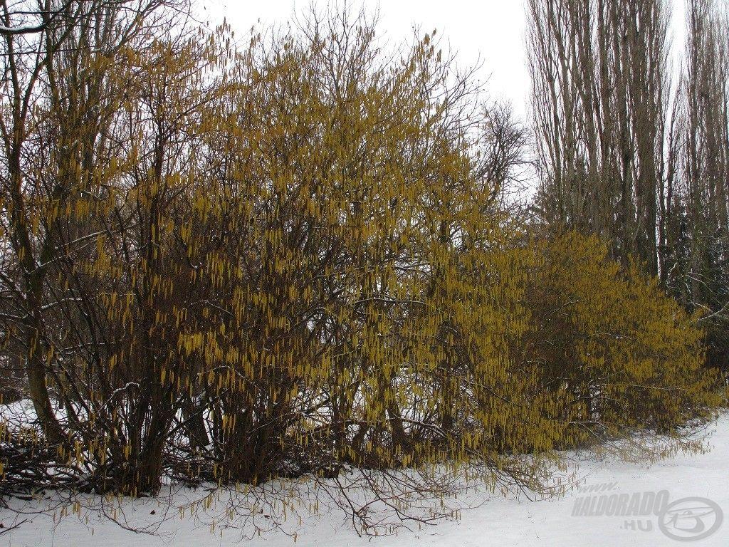 … februárban pedig többször esett hó…