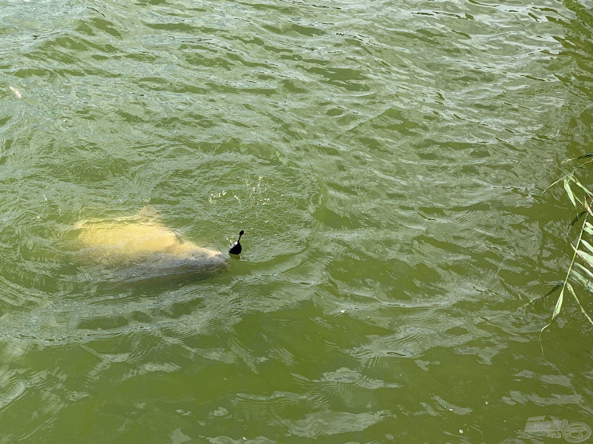 Hihetetlenül izgalmas pillanatok számomra, mielőtt először megpillanthatom a megakasztott halat