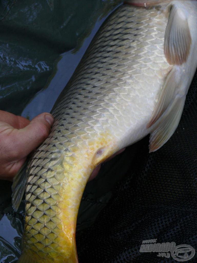 Jellegzetes hal volt, hiszen hiányzott egy úszója