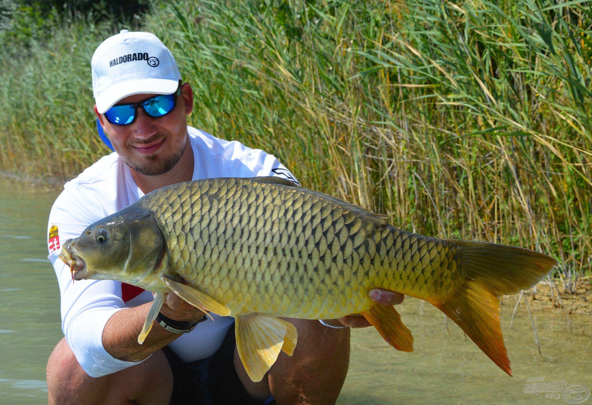 Ez volt a leginkább jellemző méret a horgászaton, az ilyen méretű tőpontyból fogtuk a legtöbbet