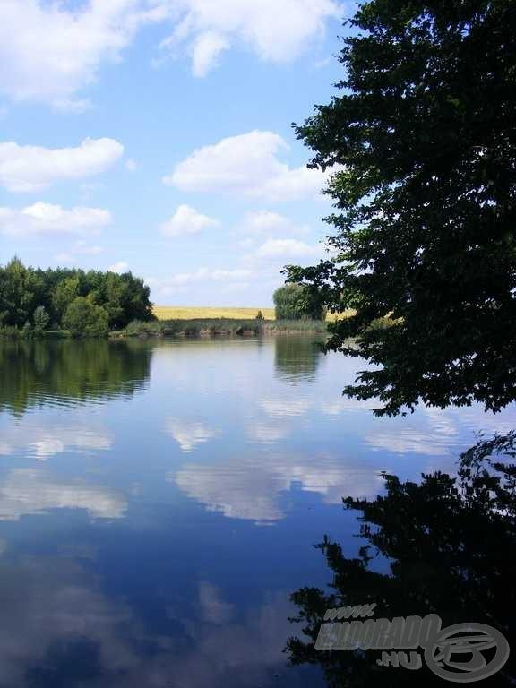 A tó partját sűrű nádasok…