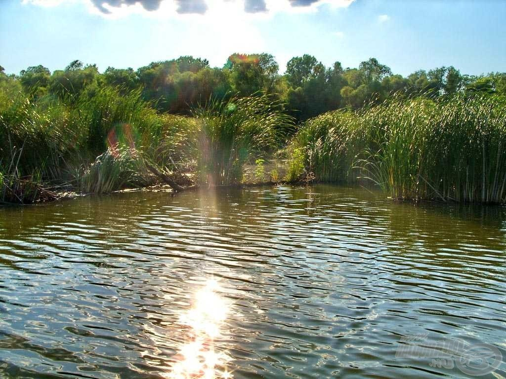 A tó középső régiójában húzódó nádas kiváló haltartó helyeket és a halak által gyakran látogatott folyosókat rejt
