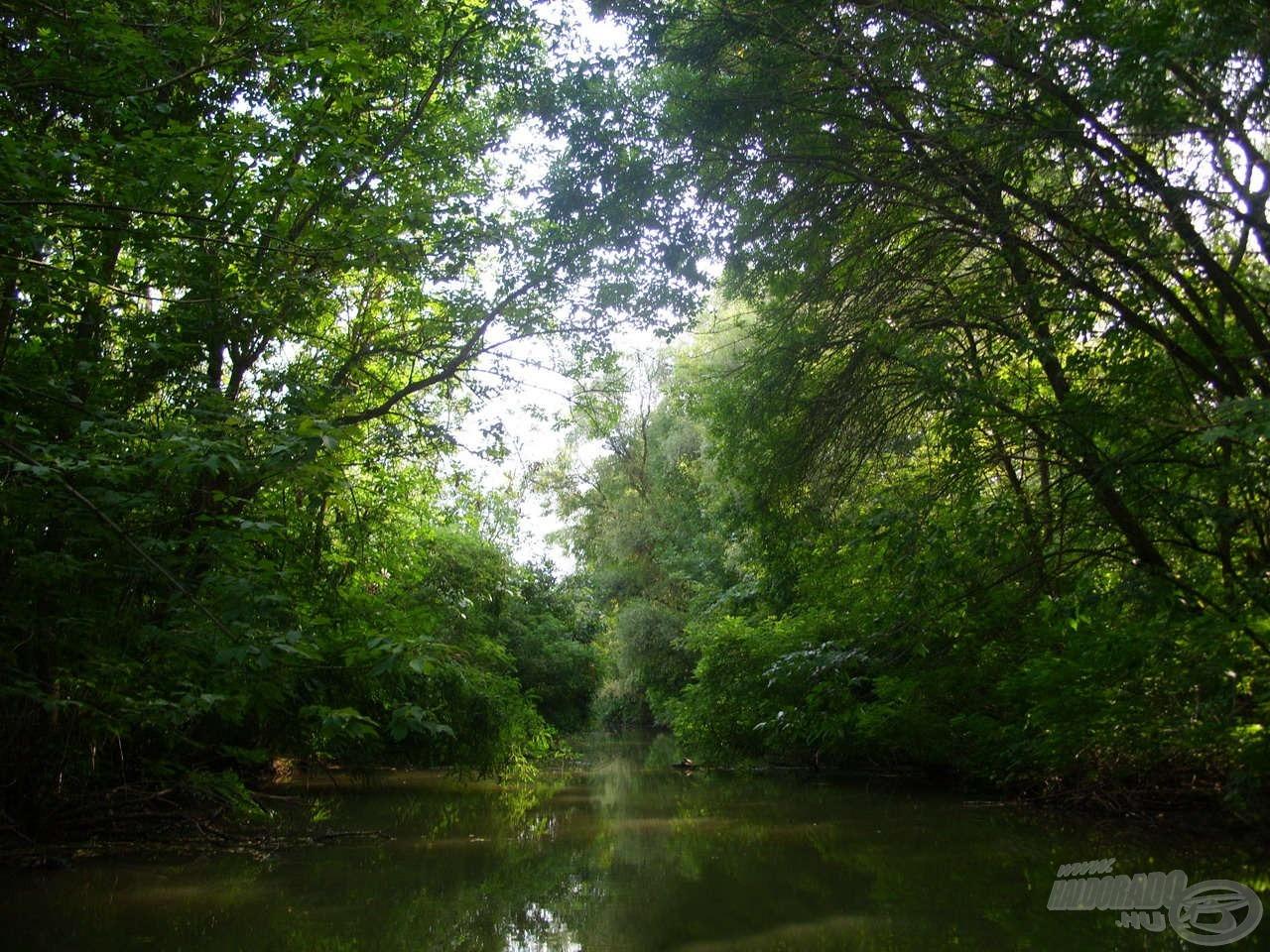 Rengeteg csatorna található a tározó majd minden szakaszán. Aki háborítatlan természetre vágyik, itt garantáltan megtalálja!