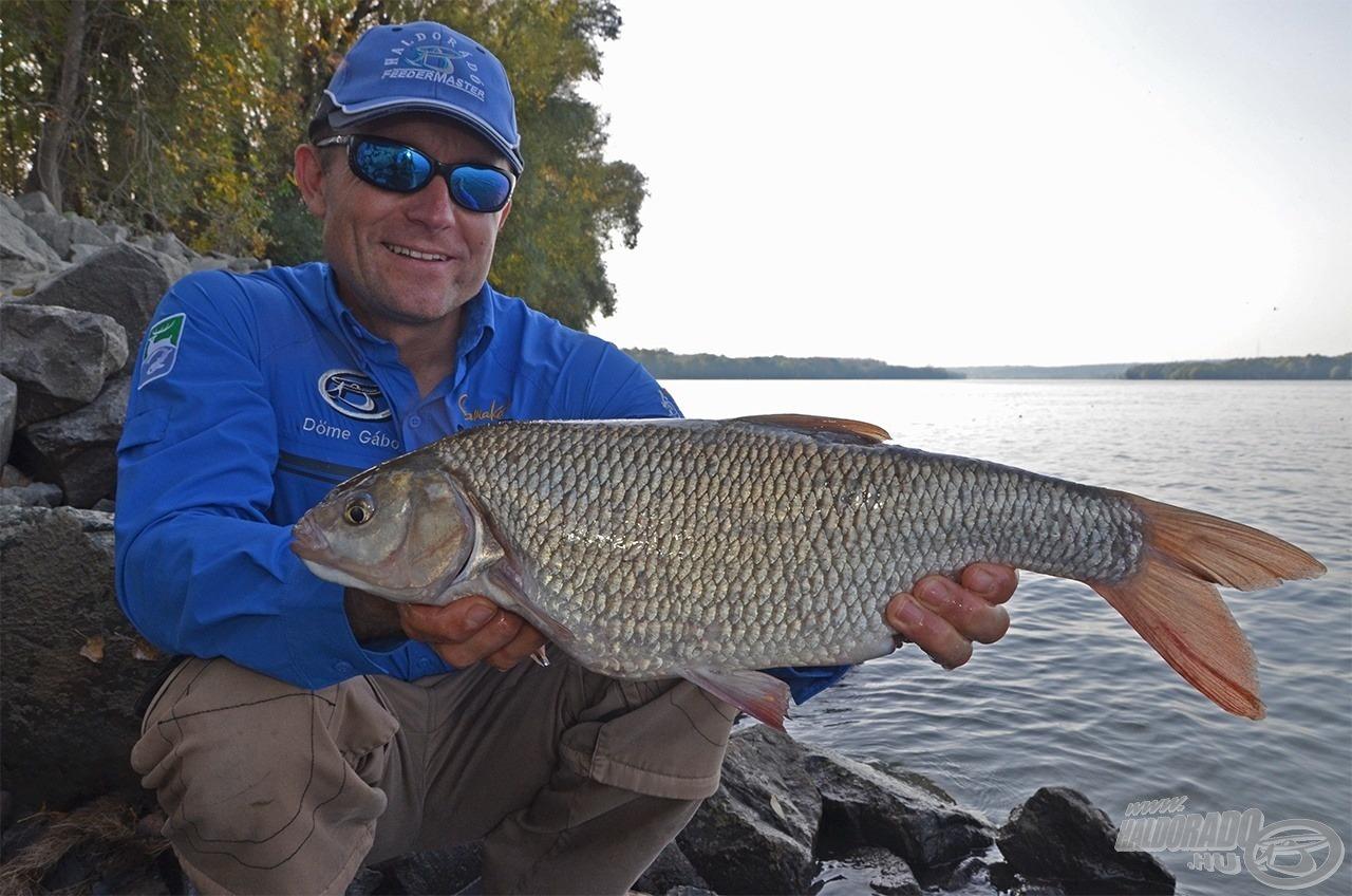 Versenykörülmények között ilyen halakhoz segített már hozzá ez a kosár. De nem csak engem! A 2014. évi Haldorádó - Duna Feeder kupán a mezőny jó része már ilyen kosárral horgászott!