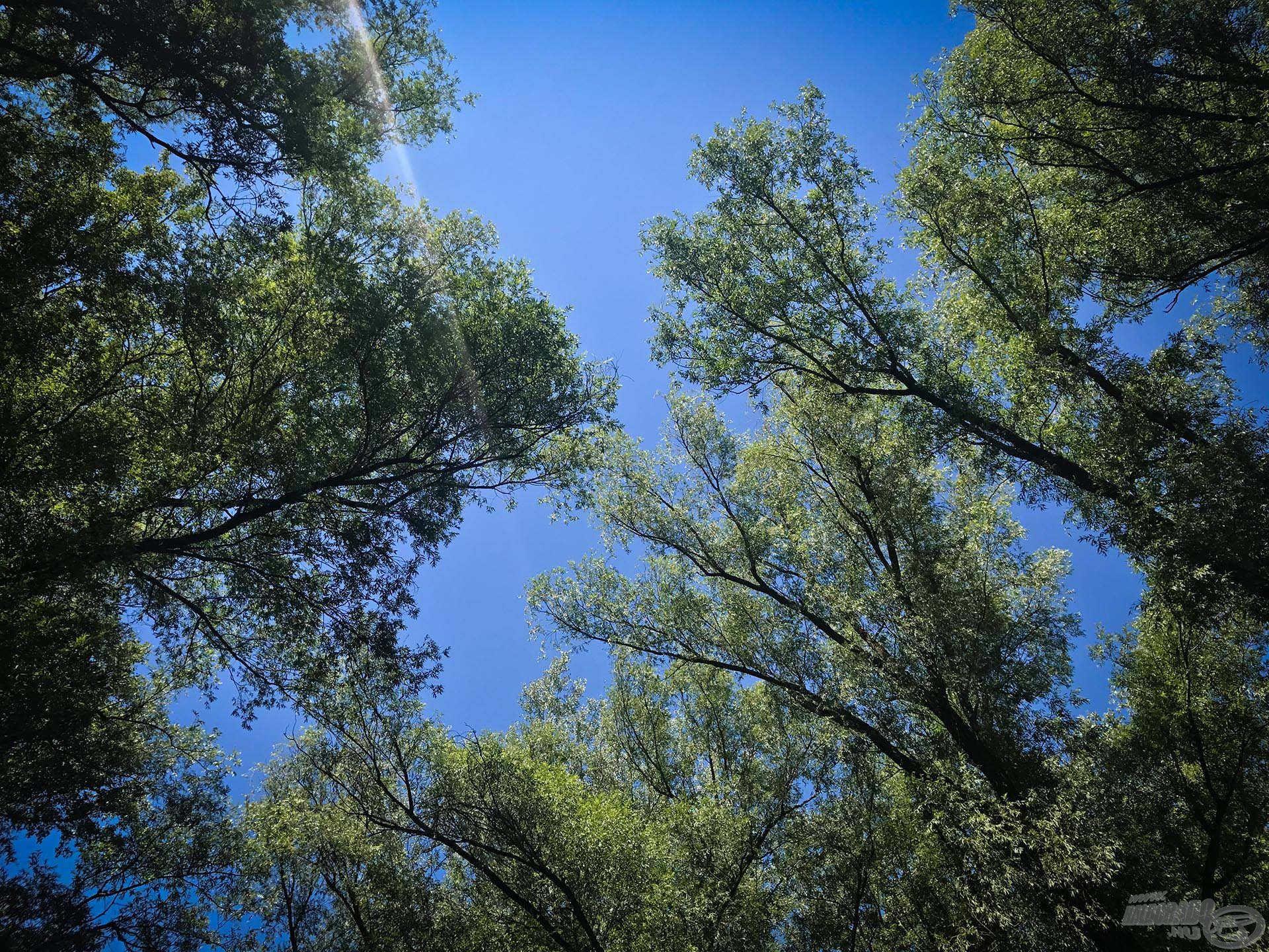 Szokatlan a szemnek a nyugodt fák, illetve a felhőmentes égbolt látványa