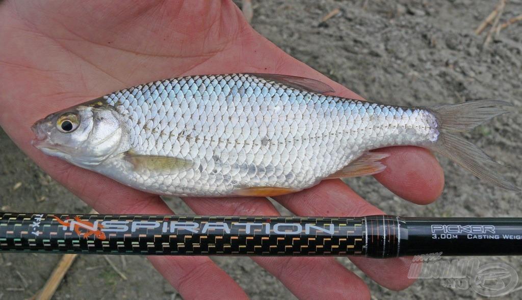 Az érzékeny Spro Inspiration picker még a halak gondolatát is jelzi!