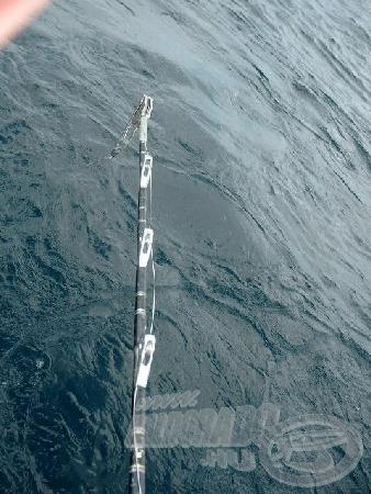 Az erős tengeri botok nélkülözhetetlenek.