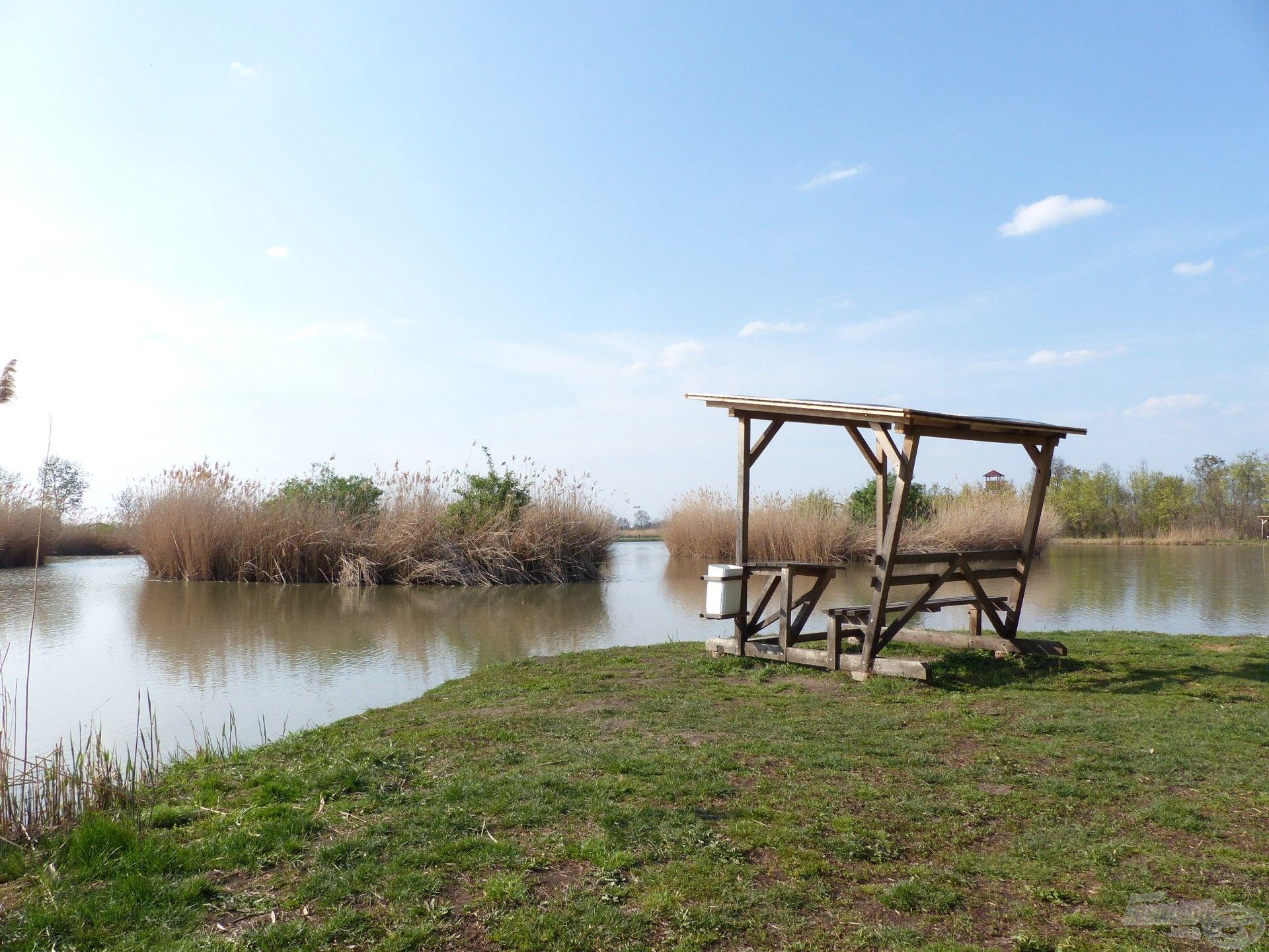 Segítőm által javasolt horgászhely a tó belső oldalán, ami kiemelkedik a többi állás közül, hiszen egy kicsit benyúlik a tóba
