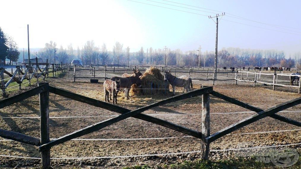 A szomszédos lovarda is népszerű kirándulóhely