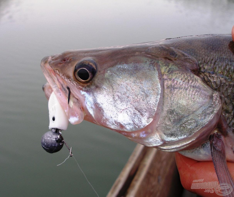 A Nevis Action Shad sok halat adott már nekem