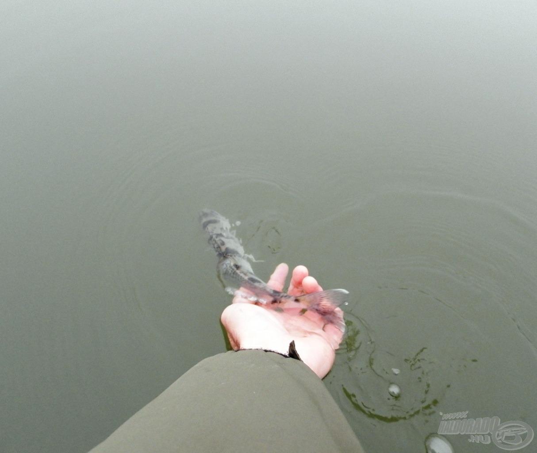 … de így azért szebb elengedni a halat, mint visszadobni