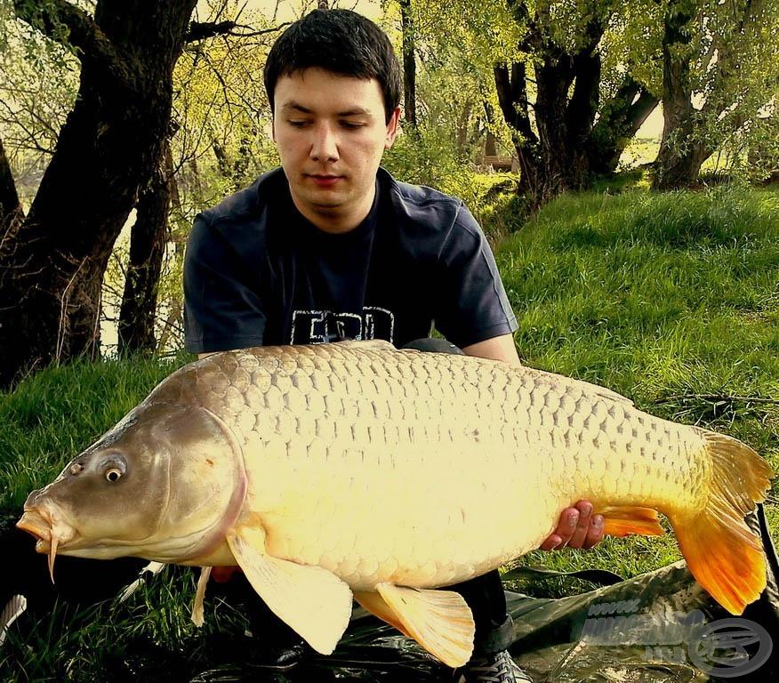 Balázs 16,50 kg-os gyönyörű pontya is Magyar Betyáros Pellet Packra érkezett, így ismét ezt használtuk a Magyar Betyár etetőanyag mellett