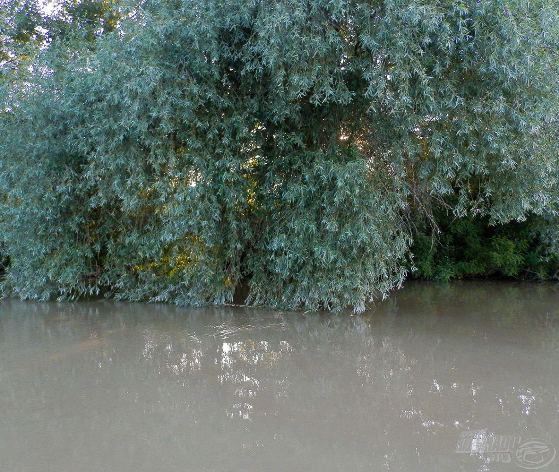 A lombok előtt elvágó víz, a fa alatt visszaforgó